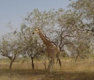 5.Niger
